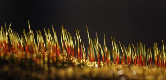 Moossporen im Gegenlicht