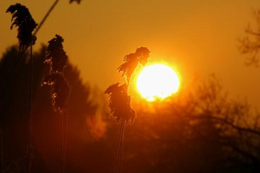 Sonnenaufgang am Teich