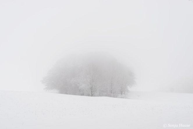 Nebel, Frost, Wald