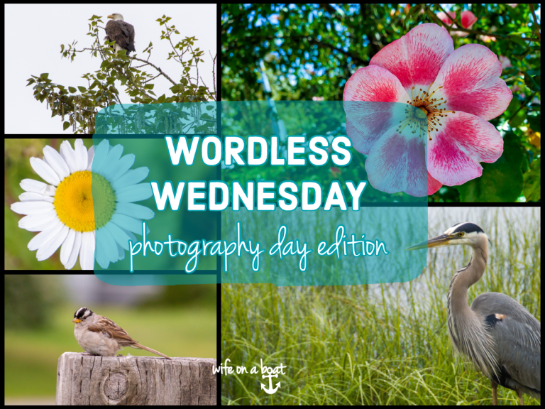 Wordless Wednesday Photography Day