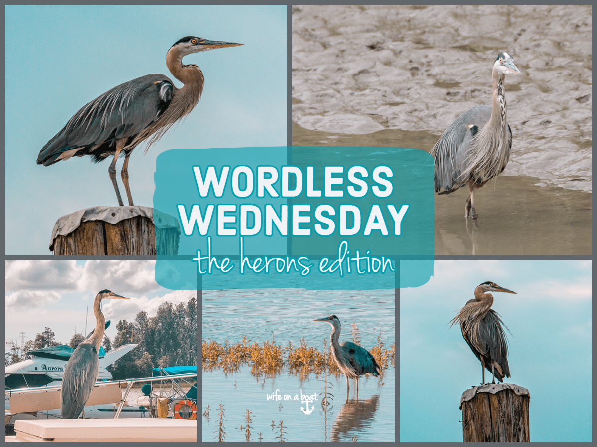 Wordless Wednesday Herons