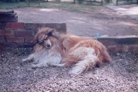 1_Poggy Doggy Shades