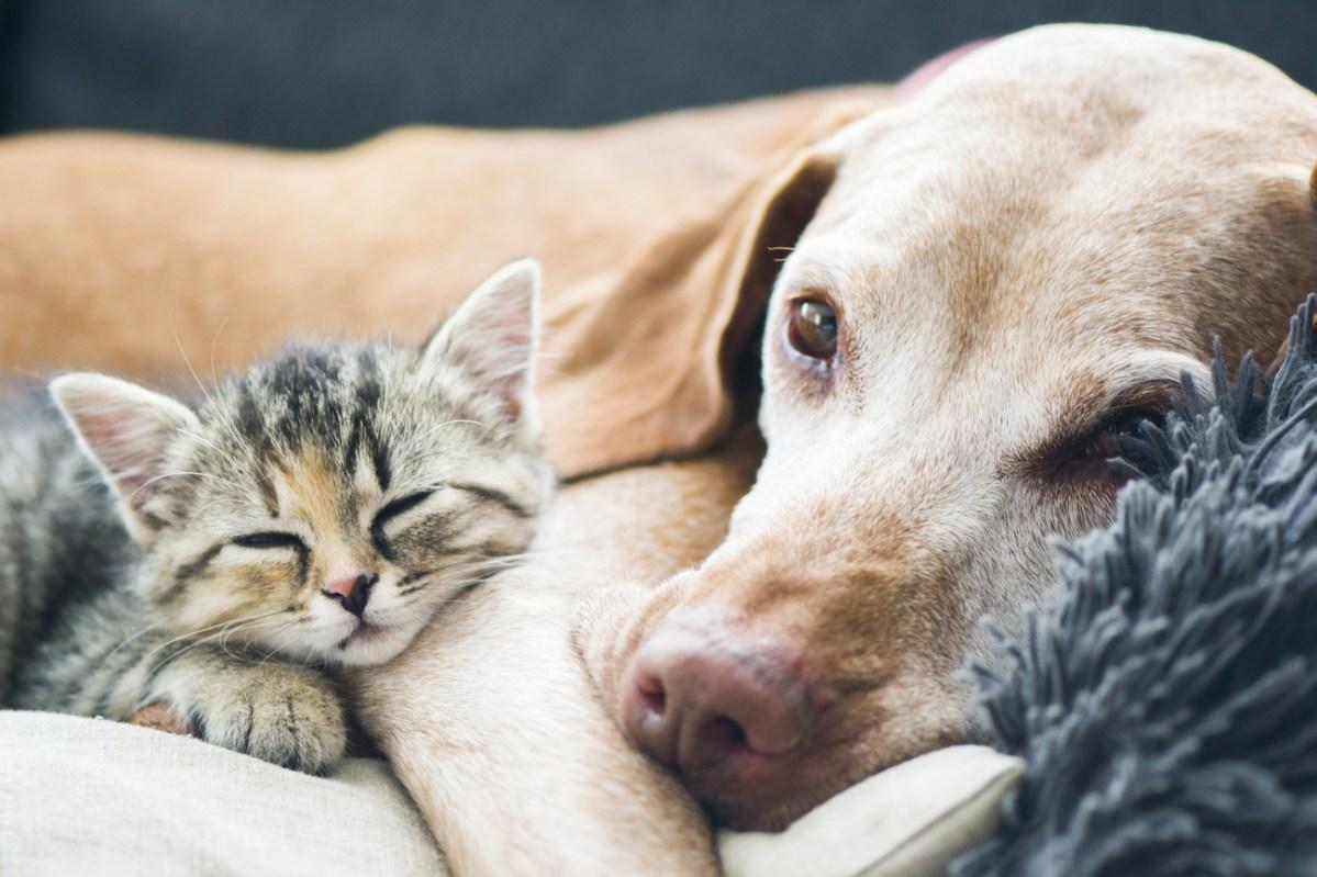 Tierhaltung und Tierschutz – das vergisst man ein Leben lang nicht!