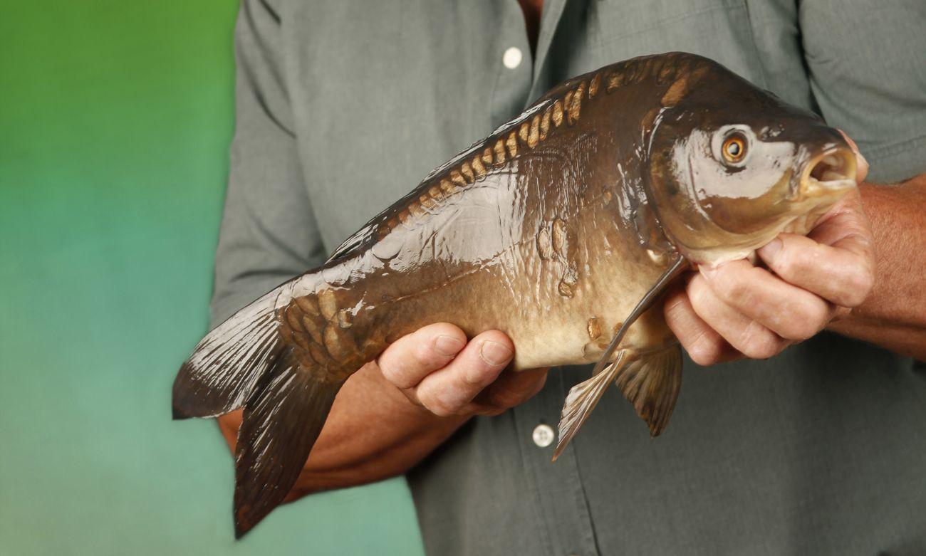 Fünf Gründe, warum wir einen Fischsommelier brauchen