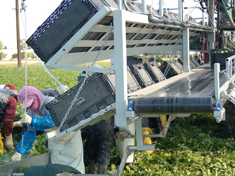 harvester-conveyer