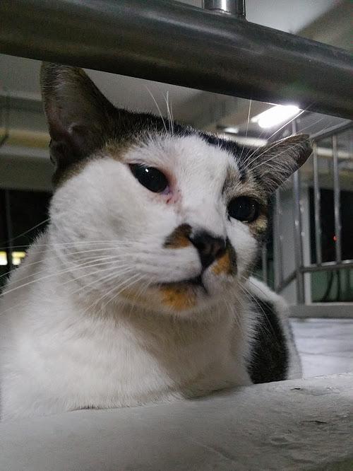 void deck cat