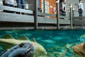 2D Atlanterhavsparken Aquarium en Mount Aksla(01jan-01jun & 02nov-31dec)