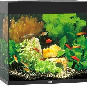 Juwel Lido 120 aquarium (Kleur: zwart)