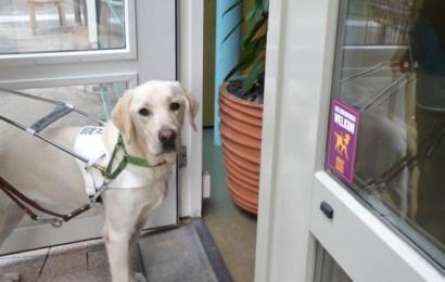 Geleidehondenbazen ervaren hotels als minst toegankelijk