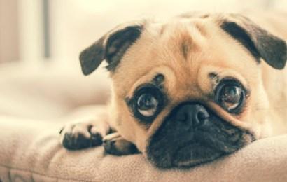 Contact maken met je hond op een spirituele manier