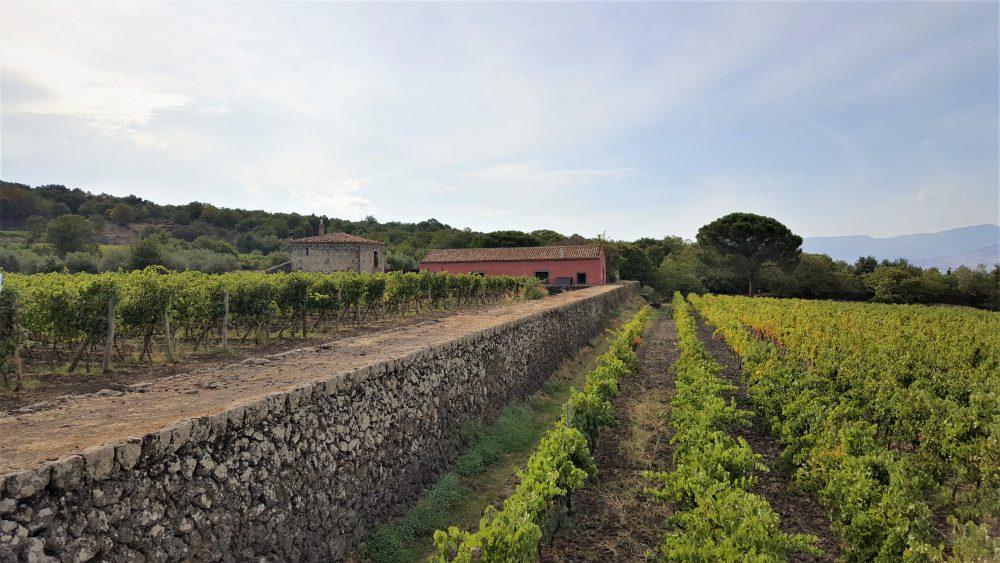 Siciliaanse wijn proeven en wijnhuizen op Sicilië: Planeta