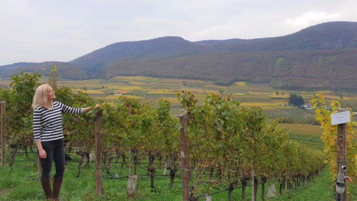 Elena Walch winery