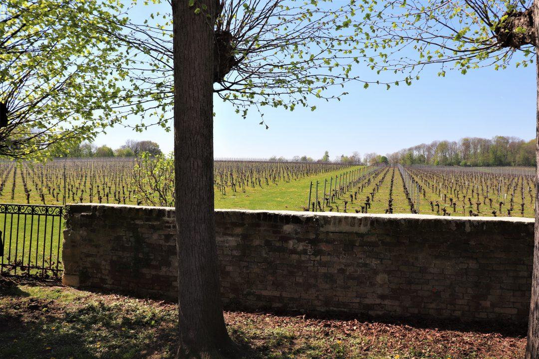 wijnreis naar Limburg: wijngaard Genoels Elderen