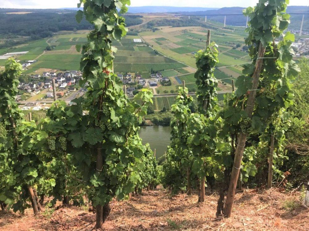 tips voor wijnreis Moezel