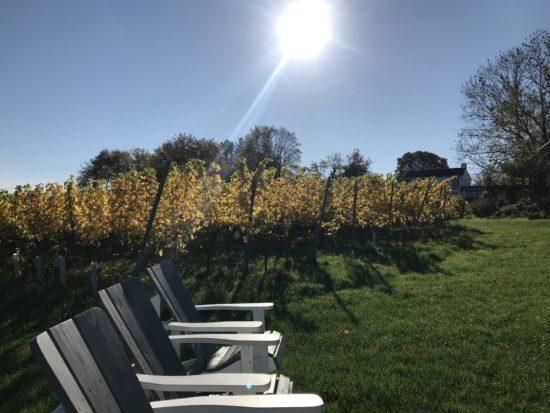 bezoek Nederlandse wijngaarden