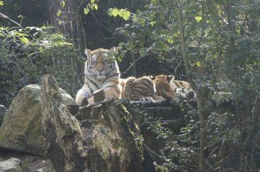 Amersfoort, dierentuin