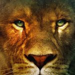 narnia1 The Chronicles of Narnia: The Lion, the Witch and the Wardrobe