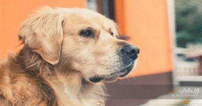تفسير رؤية الكلب في الحلم ويكي عرب