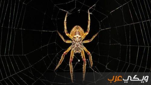 تفسير رؤية العنكبوت في المنام ومعناه ويكي عرب