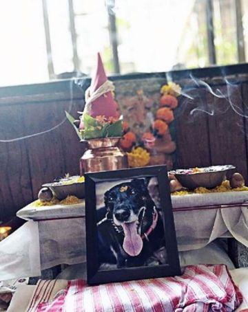 Kranti Prakash Jha's Dog Death Anniversary