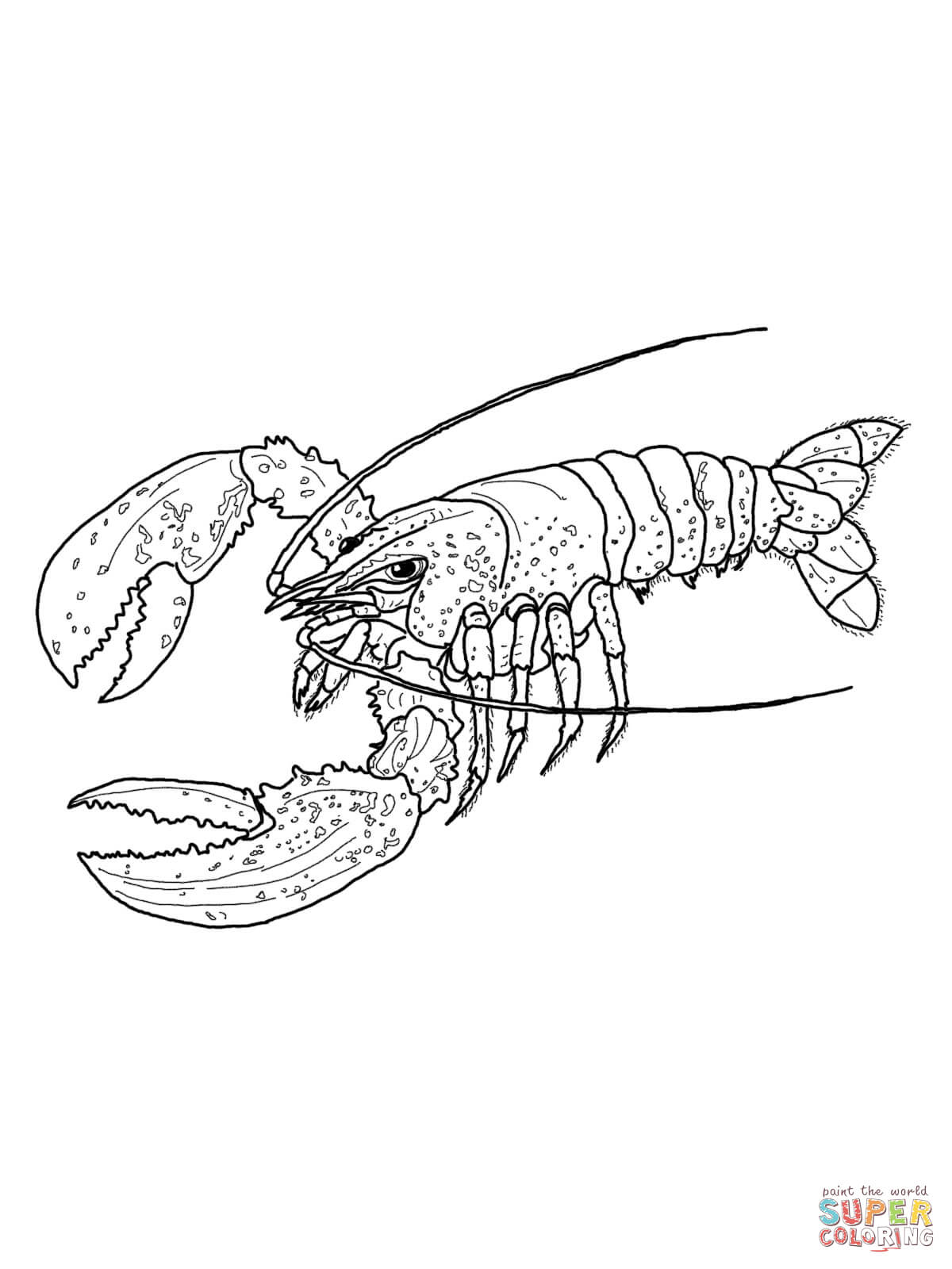 Lobster Outline 6