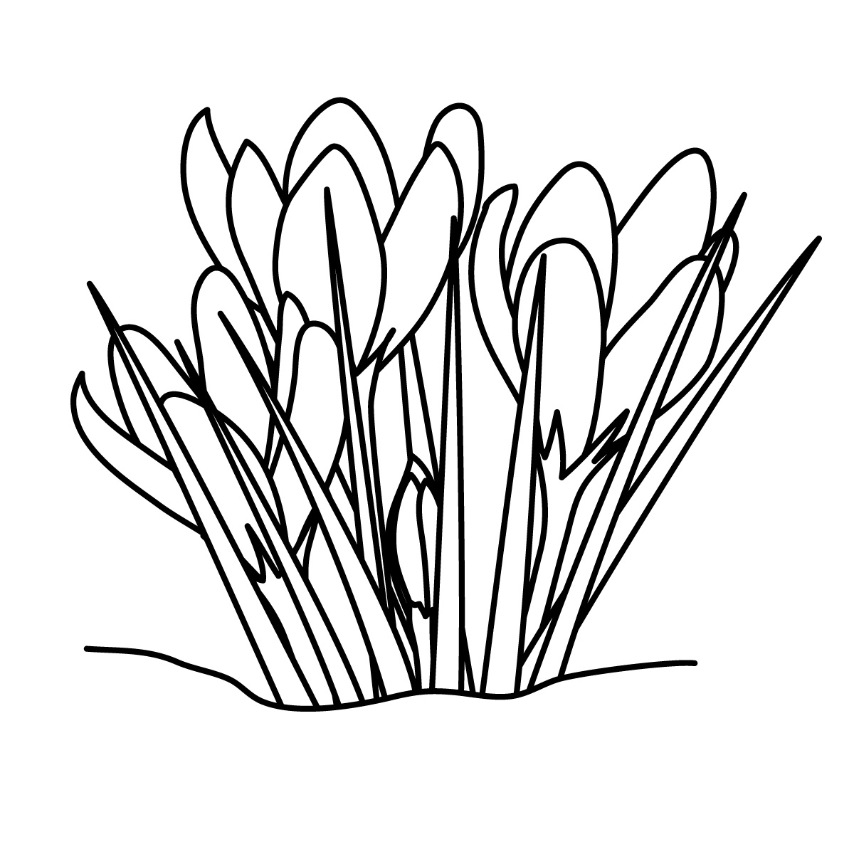 Grass Black And White Grass Clipart Line Drawing Pencil
