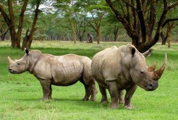 صيد-الفرائس-الكبيرة--في-أفريقيا---صيد-وحيد-القرن