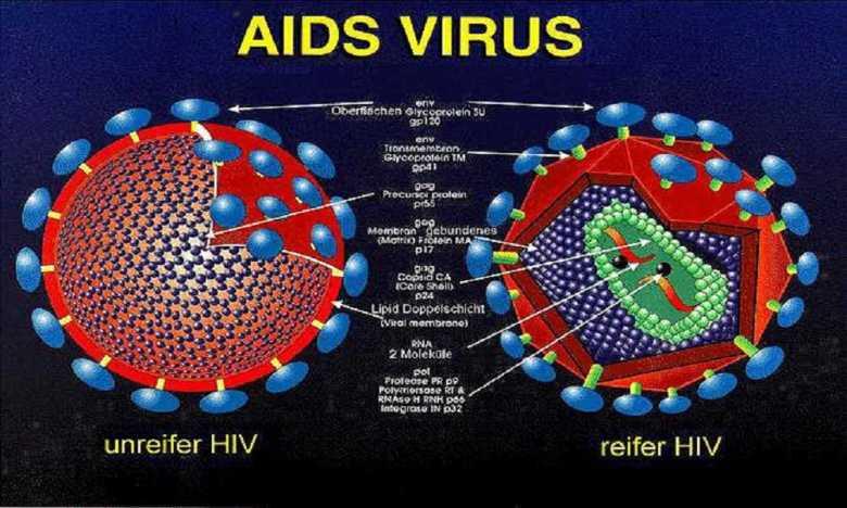 virus bệnh aids