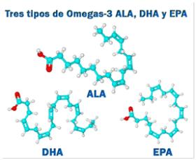 Tipos Omega-3_Wikigimnasio.com
