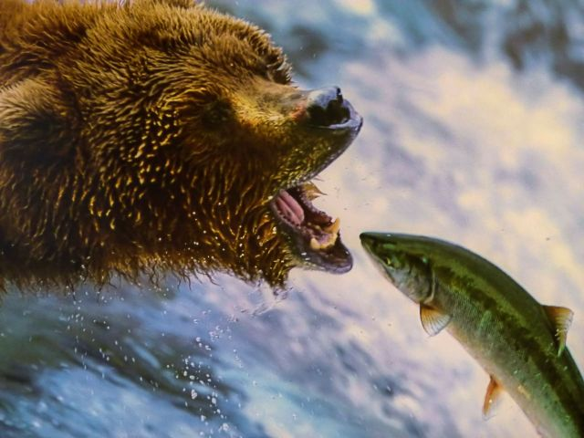 Omega-3.grizzly