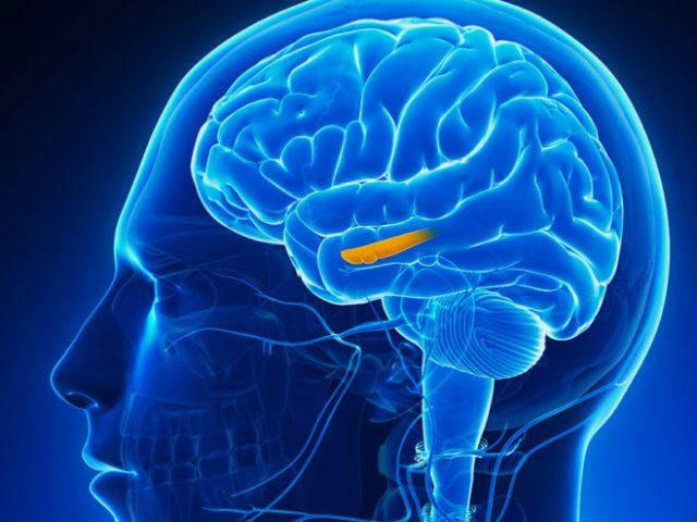 Nerve cells don't regenerate