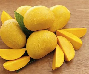 Is Mango Diet will help you to lose weight?