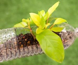 Rotational Molding: Cost-efficient Production of Eco-friendly Plastics