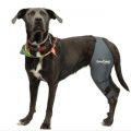 4 Major Benefits of Using a Dog Knee Brace For Your Injured Fur Baby