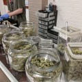 What Should You Know About Recreational Dispensary Etiquette in Colfax, Denver?