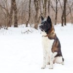 10 Best Guard Dogs to Protect Your Family and Home 1
