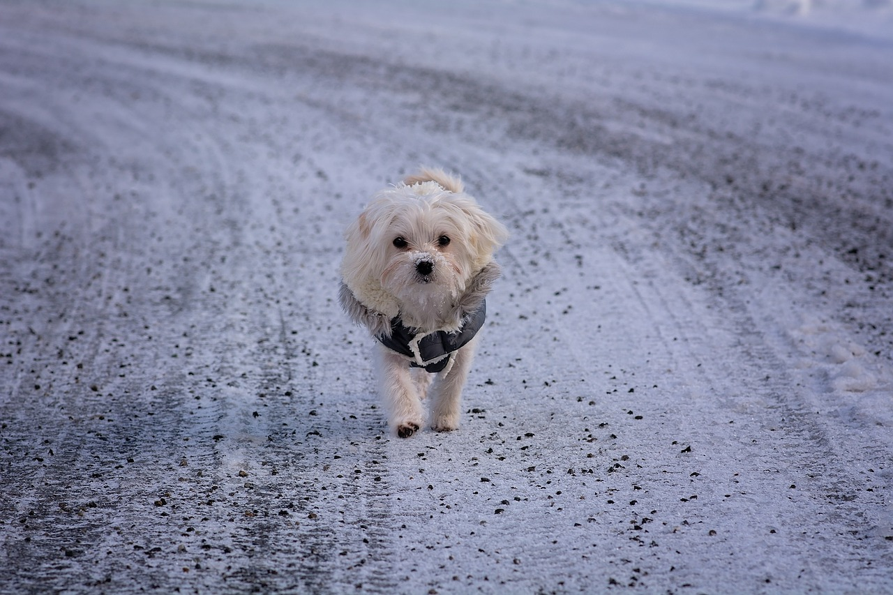 9cc496d508e #WinterIsHere: Ways Cold Weather Can Affect Your Dog and How Cold is Too  Cold?