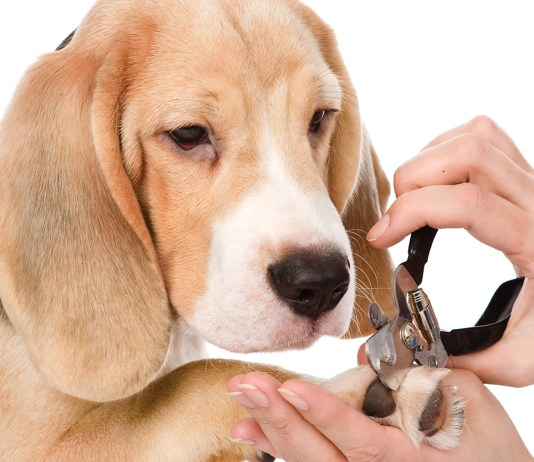 Ways To Trim Your Dog's Nails