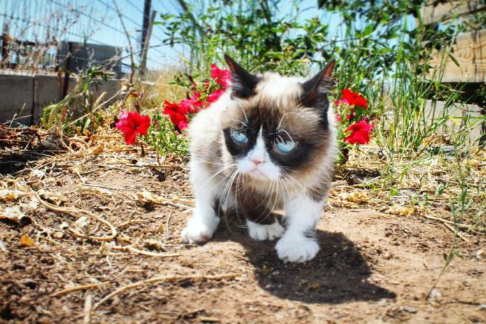 10 Common Cat Myths Debunked: Setting The Facts About Cat Myths Straight 1