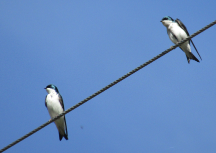 7b72f5a9e6082c04ede471a94c49c4d4703737dd 1 - Do Birds Get Shocked When They Sit on Wires?