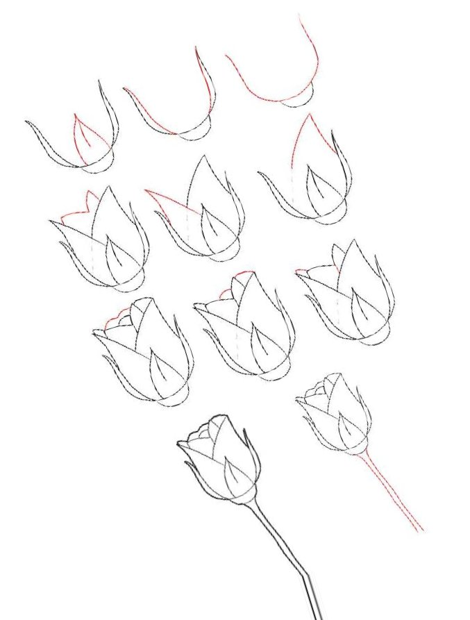 как нарисовать куст розы поэтапно пошаговый урок как