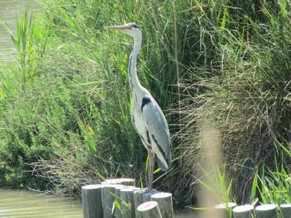 Bird Sanctuary, The Camargue, France