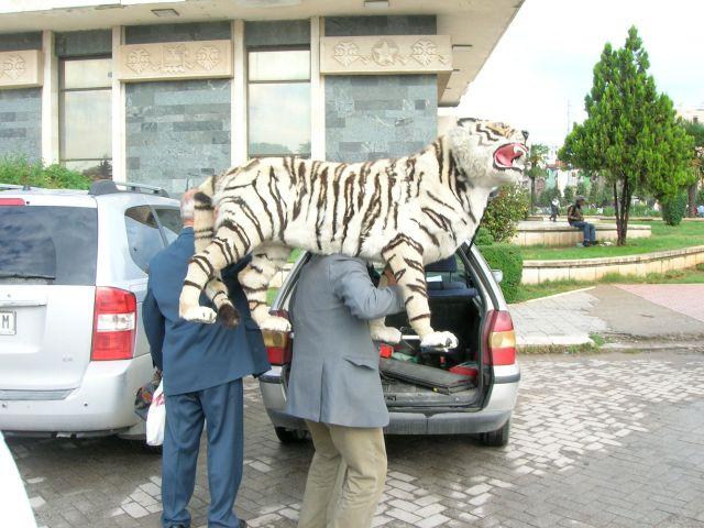 Tiger Entrepreneur, Tirana, Albania