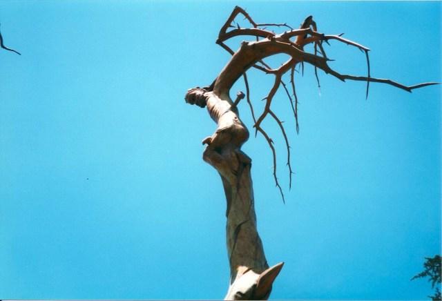 Cedars (1)