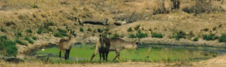 Water Bucks (2)