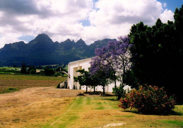 Seidelberg Vineyard Near Paarl