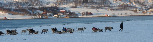 Reindeer Sledding near Tromso, Norway