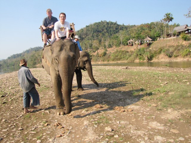 Elephants Laos