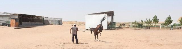 The Akhal-Teke Horses of Turkmenistan