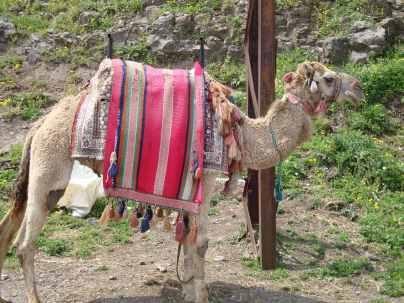 Camel Krak de Chevaliers